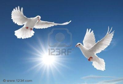 4621953-due-colombe-bianche-di-volo-sul-cielo-blu-chiaro